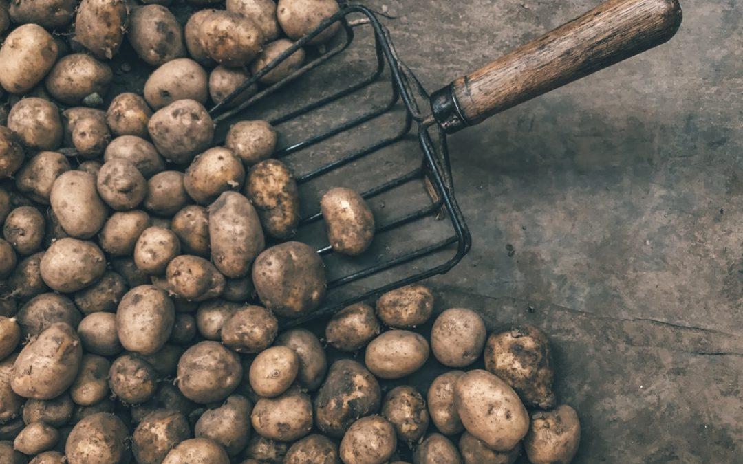 Aardappel ventilator bij langdurig bewaren aardappelen